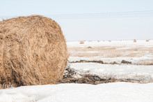 Snow Covered Round Bale Of Hay In A Farmers Field
