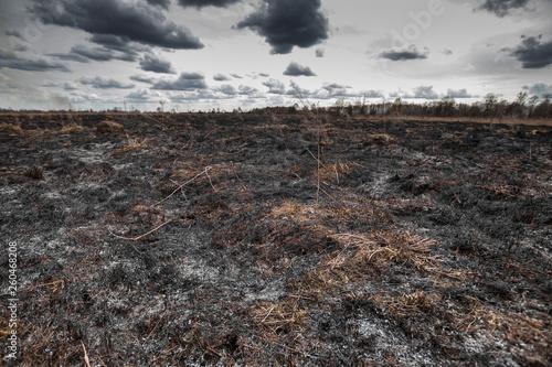 Fotografie, Obraz Scorched earth, spring fires