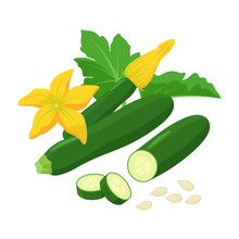 Zucchini With Beautiful Squash Blossoms And Seeds Isolated On White Background. Vector Botanical Illustration Of Dark Green Courgette With Awesome Yellow Flowers.