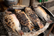 Grilled Tilapia Fish With Herbs, Healthy Asian Local Food With Good Taste