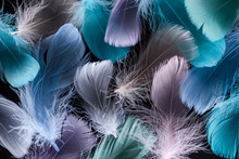 Seamless Background With Light Green, Purple And Blue Feathers Isolated On Black