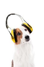 Hund Trägt Einen Gehörschutz...