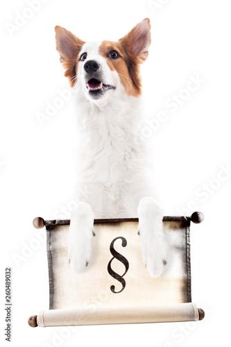 Hund hält eine Schriftrolle mit dem Paragraphen Zeichen, freigestellt vor Weiß