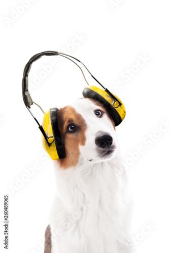 Hund trägt einen Gehörschutz, isoliert vor Weiß Wall mural