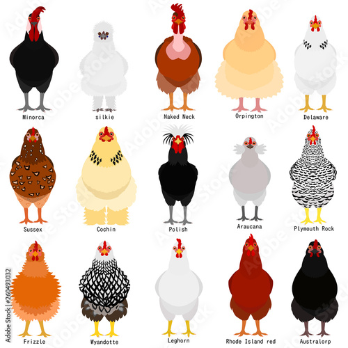 Foto chicken chart with breeds name
