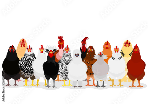 Leinwand Poster various chicken group