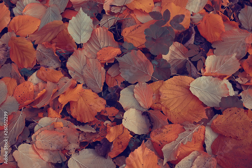 Photo Stands Trees fallen leaves background / autumn background yellow leaves fallen from a tree