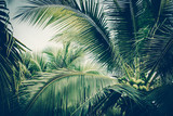 Coconut palm tree foliage under sky. Vintage background. Retro toned poster. - 260513063