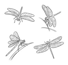 Set Of Different Dragonflies In Outlines - Vector Illustration