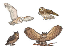 Set Of Different Owls - Vector...