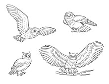 Realistic Owls In Outlines - V...