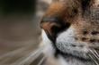Schnauze einer Katze in Nahaufnahme