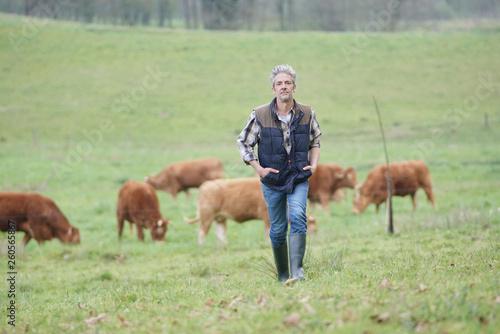 Pinturas sobre lienzo  Farmer walking in field with cattle in the background