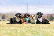 Five Dogs Pose With Plastic Mu...