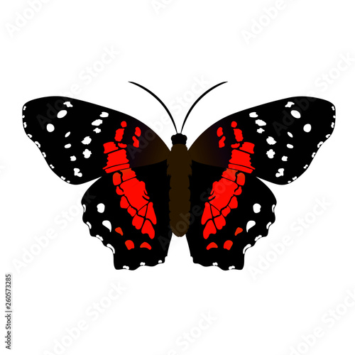 Mariposa monarca colorida vector Wallpaper Mural