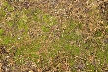 Spring - Grass
