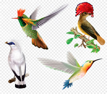 Tropical Birds And Hummingbird On A Transparent Background