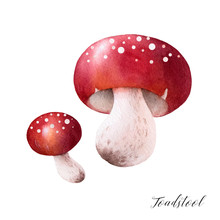 Isolated Watercolor Illustrati...