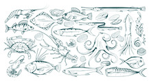 Set Of Different Sea Fish And ...