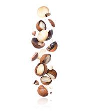 Cracked Macadamia Nuts Fall Do...