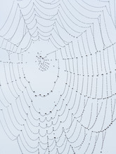 A Spider Web With Water Drops ...