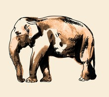 Indian Elephant. Drawing By Hand In Vintage Style. Texture Watercolor Paint.