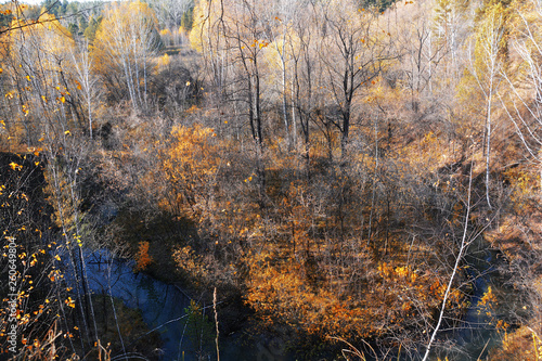 Fototapety, obrazy: Autumn red forest and small river photo image
