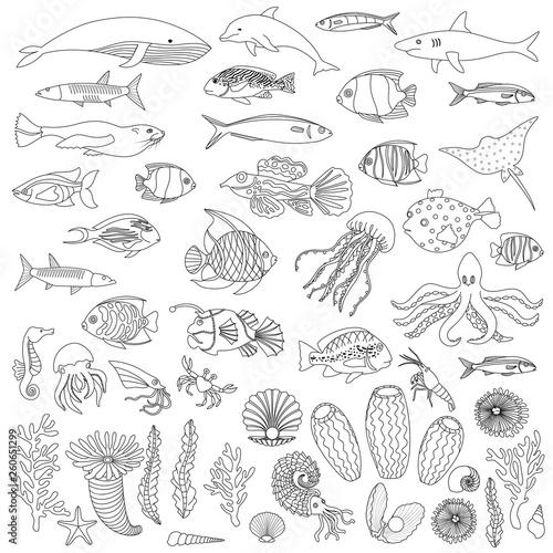 Fototapeta  Sea Fish and Plants Coloring Outline Set