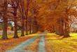 Autumn Back Road