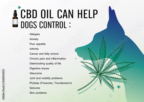 Fototapeta cbd oil can help dogs control and vector infographic on white background. obraz