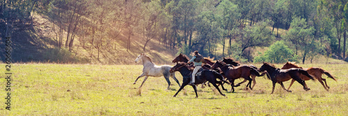 Fototapeta A Herd Of Wild Horses Racing Across Country obraz