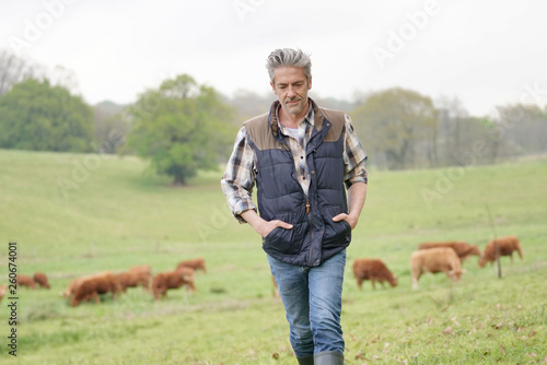 Fotografía Farmer walking in field with cattle in the background