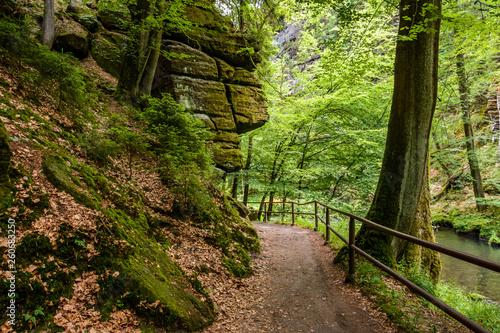 Foto op Canvas Weg in bos Path in the forest, Bohemian Switzerland National Park, Czech Republic