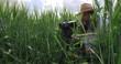Videographer man with beard in hat sits in an ambush in green wheat field