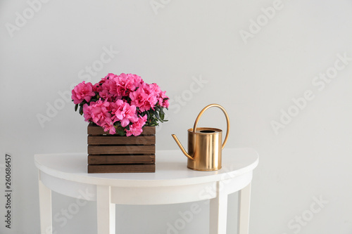 Poster de jardin Azalea Beautiful blooming azalea and watering can on table against light background