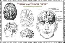 Engraving Set Of Vintage Human...