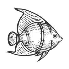Angel Fish Animal Sketch Engra...