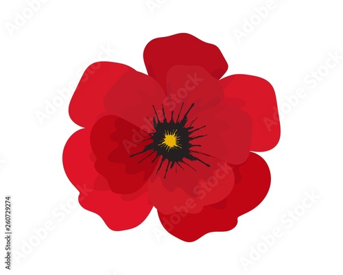 Red poppy flower isolated on white background. - 260729274