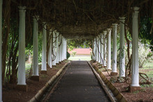 Royal Botanical Garden Is A Must See Place In Kandy, And A Very Popular Among Tourists.