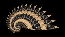 Abstract Spiral Shell Indian Style In Golden Ivory Black