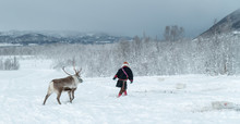 Sami Mit Rentier Im Schnee In Winterlandschaft Norwegen Bei Tromsö