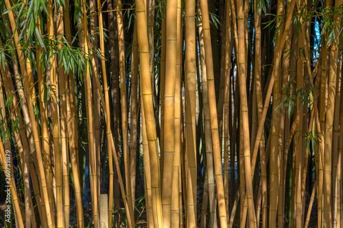 Fotografie, Obraz  Bambus im Sonnenlicht