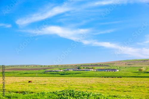 Fotografía  farmland with green meadow in the summer