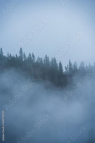 Fotobehang Bossen mist rising from valleys in forest in slovakia Tatra mountains