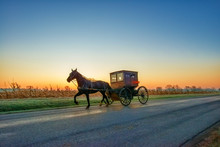 Amish Horse And Buggy Pre Dawn