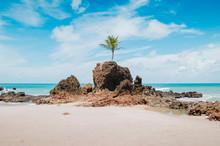 View Of Praia De Tambaba Beach, Costa Do Conde. Famous Beach By The Coconut Tree That Grew On Top Of A Rock. Beautiful Brazilian Northeast Beach. Conde PB, Brazil.