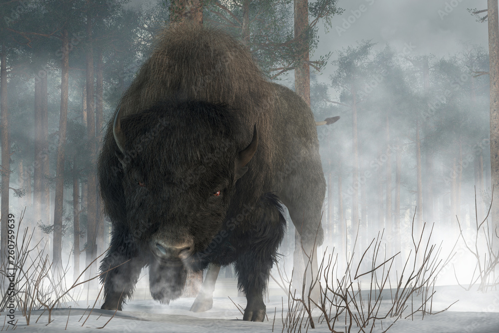 Fototapeta An angry buffalo faces you preparing to charge.  It's a cold winter day in the wilderness American West, and the buffalo breaths an angry cloud of steam over the snowy ground. 3D Rendering