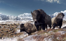 Three Large Bison Bulls Stand On A Rocky Hilltop. Behind Them The Buffalo Herd Grazes In A Valley Half Covered In The Winter Snows Of The American West. 3D Rendering
