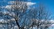 Arbol y nubes recordando a Magritte
