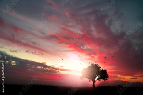 Fotobehang Zwart Sunset in the countryside